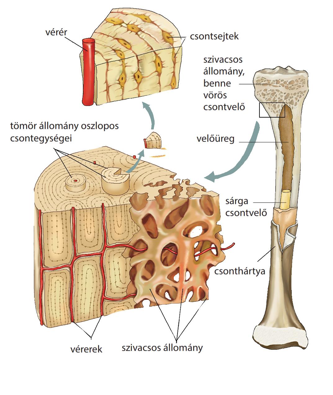 ha csontok és ízületek repedtek, kezelés