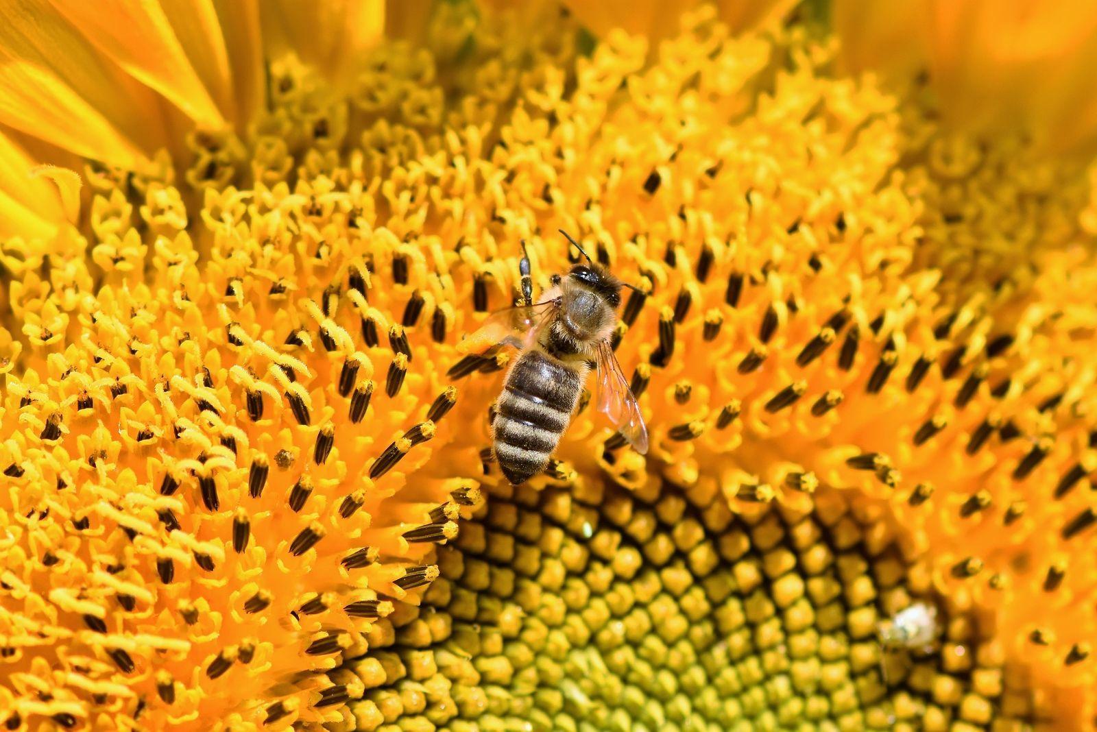 méhészeti termékek együttes kezelése)