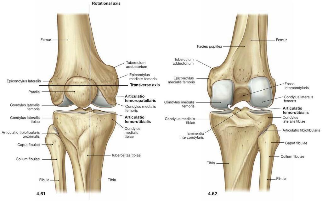 Fájó csontok - Mozgásszervi megbetegedések