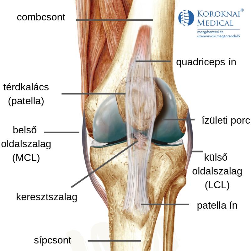térdízületi fájdalom belső sérülés)