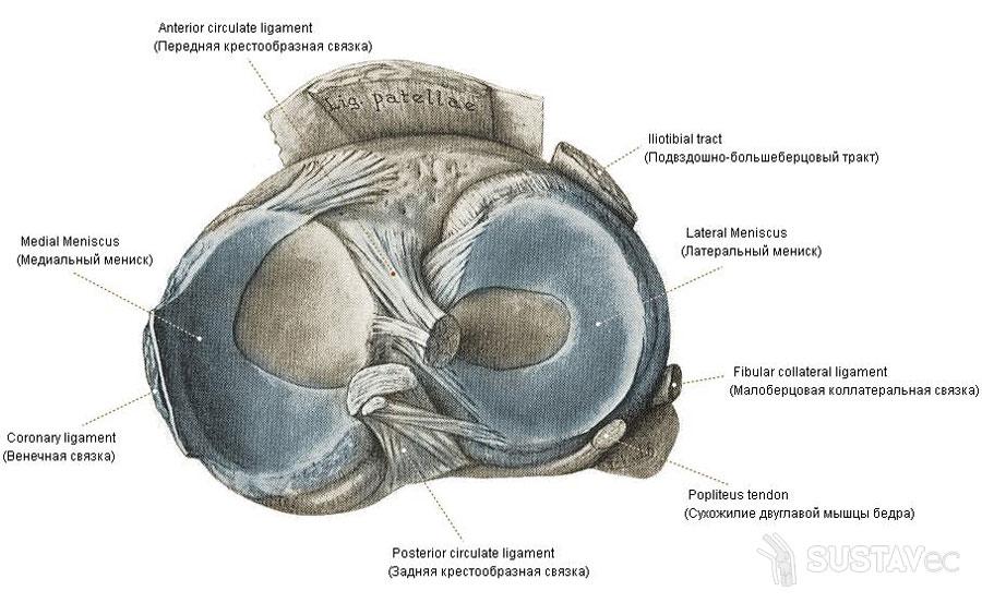 a térdszinovitis medialis meniszkuszának károsodása