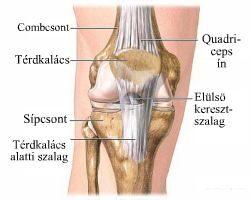 térd sérülések helyreállítási periódusa)