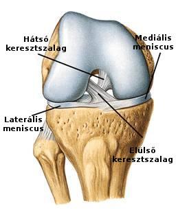 Knee Joint Aspiration and Injection :: - InforMed Orvosi és Életmód portál :: térdizületi punkció