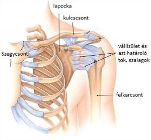 sérülések a vállízület elmozdulása miatt