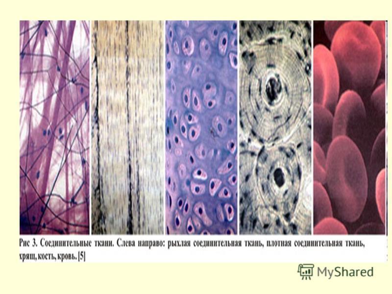 Porban lévő kollagén peptidek :: A fiatalság eliksírje - Fajta: tengeri