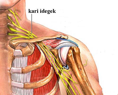 SpineArt - Vállfájdalmak Kezelése   buggarage.hu
