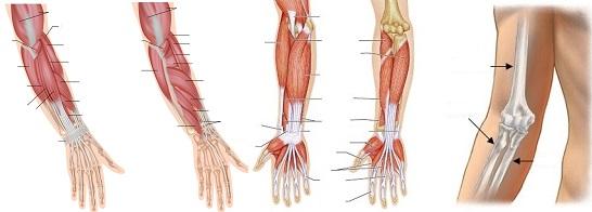 a kar törése a könyökízület kezelésénél artrózis és homeopátia kezelés