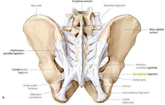 mágneses eszközök osteoarthritis kezelésére ízületi coxarthrosis felnőttek kezelésében