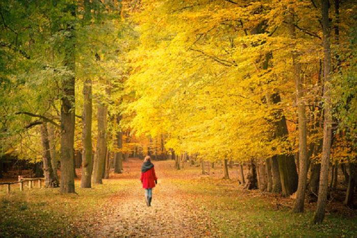 őszi közös kezelés