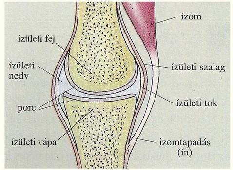 ízületi sérülések aránya