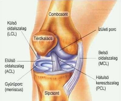 térdízületi fájdalom belső sérülés