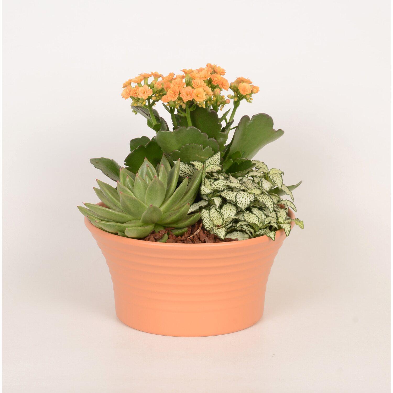 Gyógyító otthoni virágok és jótékony tulajdonságai