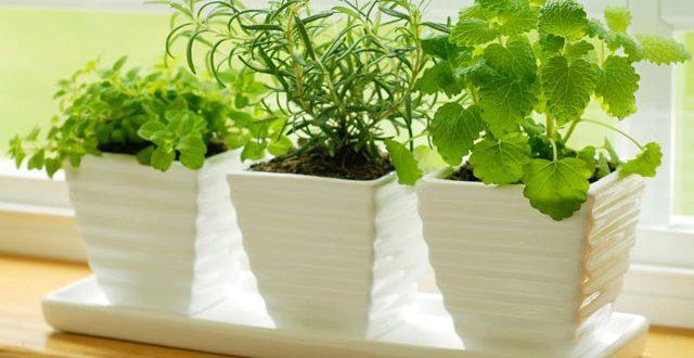 ízületi gyulladásokhoz használt gyógynövények