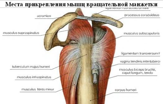 súlyos fájdalom a csípőízület izmaiban