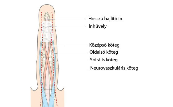 a kéz ízületei fájnak edzés közben