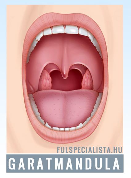 manduladaganatok és ízületi fájdalmak)