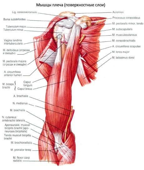 Vállízület - fájdalom a felkar emelésekor: okok, kezelés és megelőzés