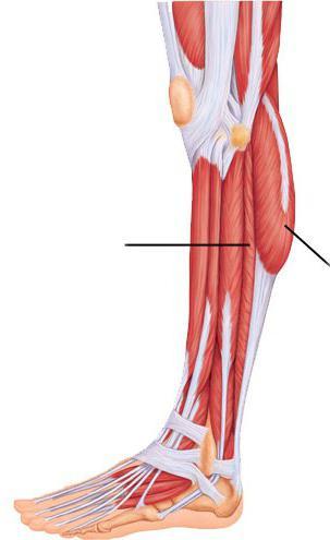 a boka ízületének szklerózisa