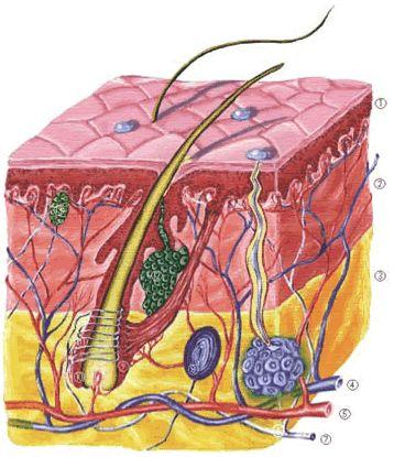 a bőr kötőszöveti betegségei