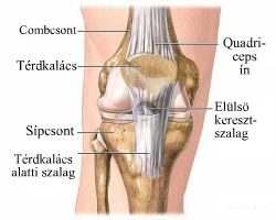 A könyök betegségei: göbös bursitis és epicondylitis - Homorú-domború lencse July