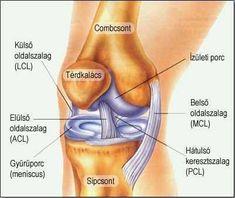 a térd artritisz fajtái