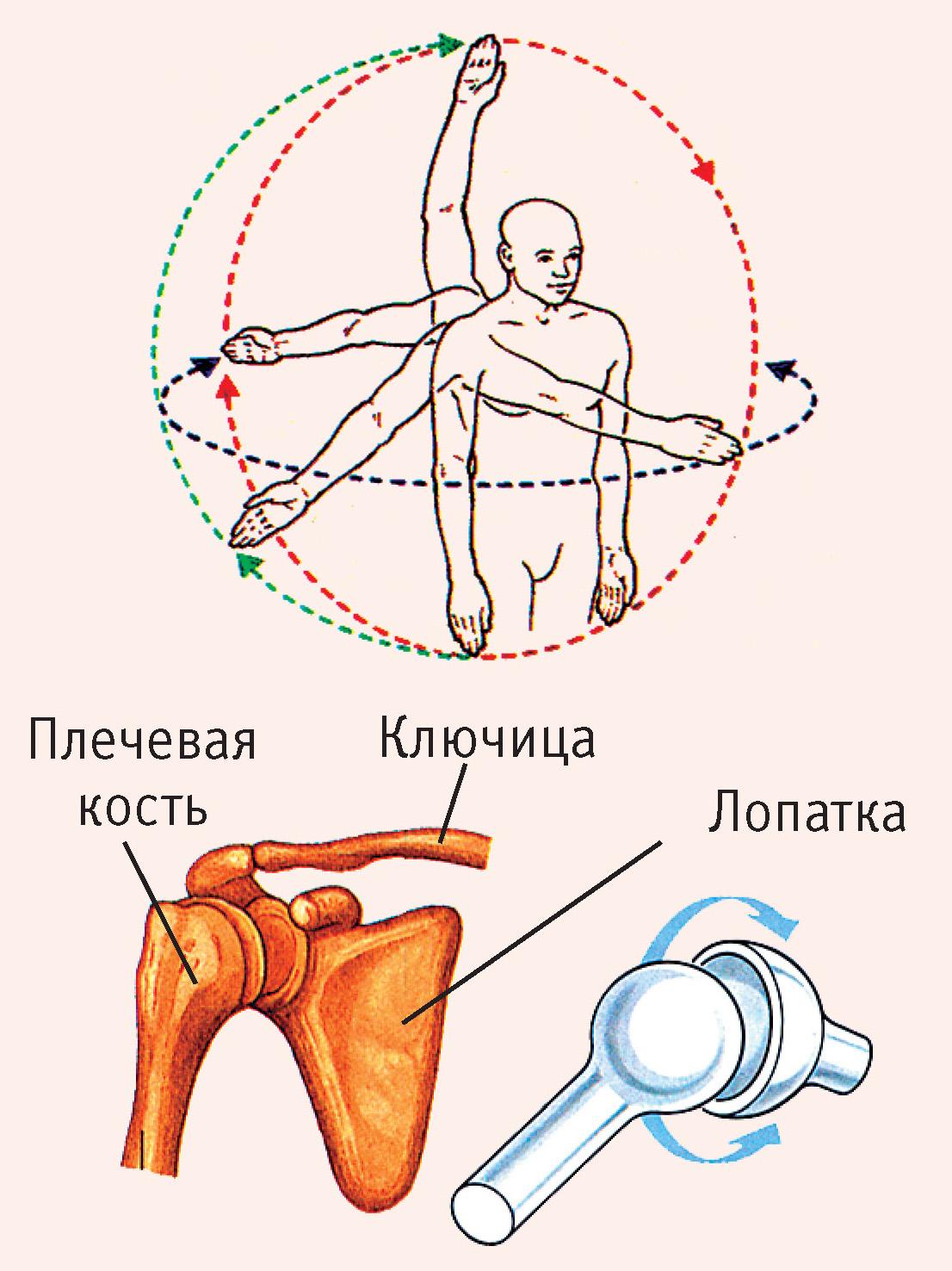 a vállízület izom-leválasztásának hamis bursitisz)
