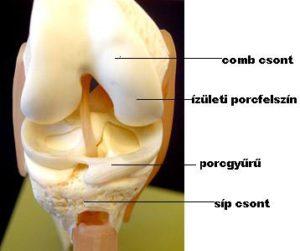 brachialis artrózis kezelési fórum ízületek ízületi gyulladásának kezelése hidrogén-peroxiddal