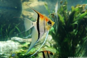 közös kezelés halak