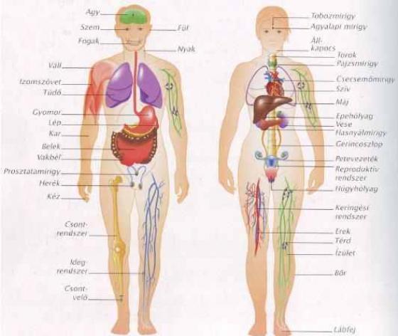 váll és nyak fájdalom lelki okai nagy lábujj ízületi fájdalma és duzzanata