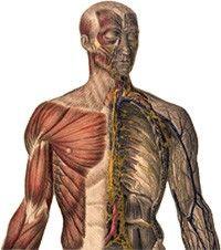 carpal sérülések csípőfájdalom jelei