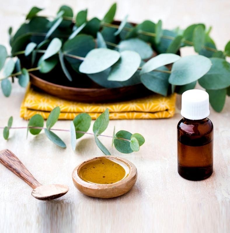 Az eukaliptuszolaj 12 gyógyító hatása – Jópofa Bolt
