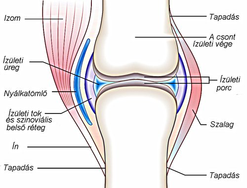 csont- és porcszövet helyreállítási folyamatok