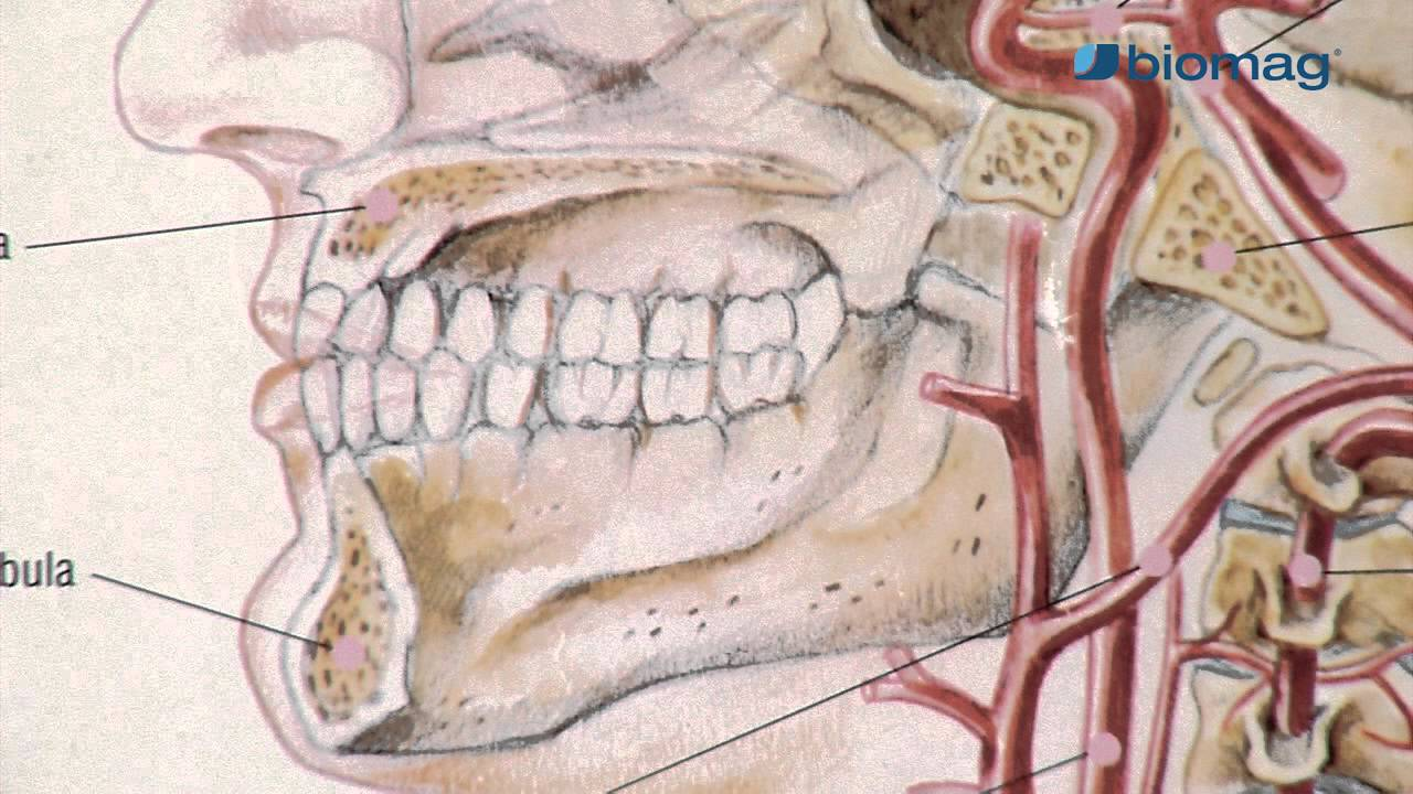 csípőízületi gyulladás kezelésére vonatkozó vélemény ízületi dysplasia kezelési rendje