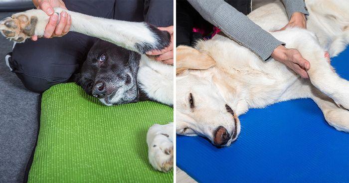 a kutyának ízületi fájdalma van