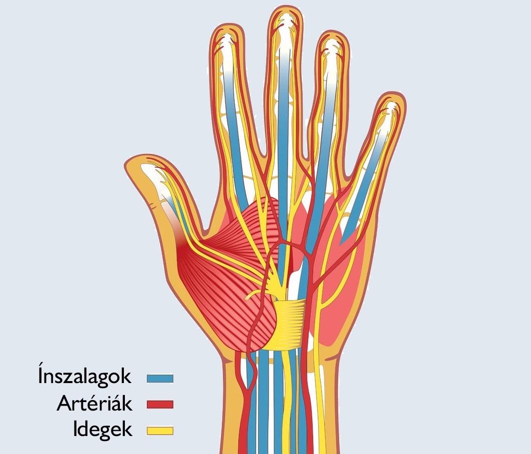 az artrózis nem gyógyszeres kezelése helyi közös készítmények