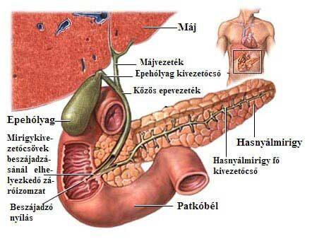 hogyan lehet kezelni az ízületi gyulladásos ízületi gyulladást